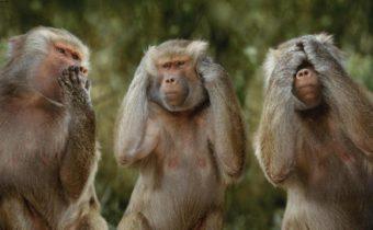 Неожиданные, но интересные факты о животных
