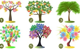 Тест: выберите дерево и узнайте тайны вашей личности