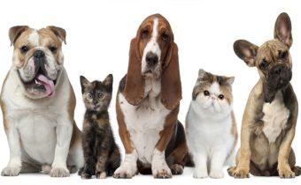 Фэн-шуй: влияние домашних животных на энергетику вашей квартиры