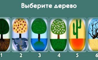 Тест: выберите дерево