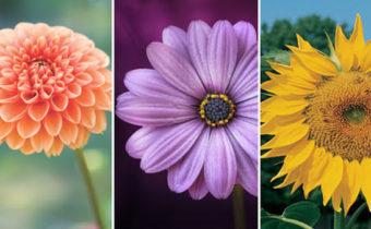 Выберите цветок и узнайте что-то новое о своих чувствах
