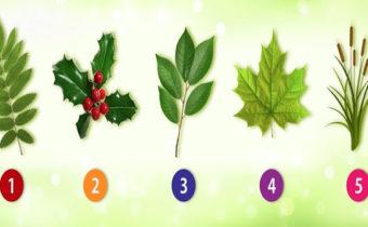 Психологический тест: какие листья вам больше нравятся?