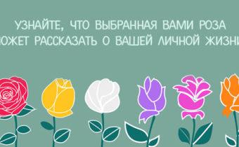 Узнайте, что выбранная вами роза может рассказать о вашей личной жизни