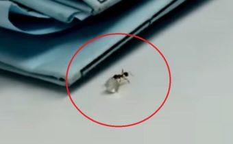 В одном из ювелирных магазинов Италии муравей пытался украсть бриллиант