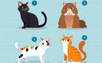 Выберите кошку и мы расскажем, что вам нужно в отношениях