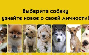 Выберите собаку и узнайте интересные факты о себе