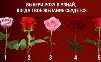 Сбудется ли моё желание? На вопрос ответит роза