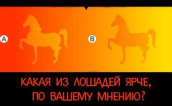 Психологический визуальный тест: какая лошадь ярче?