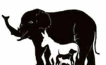Количество животных, которых вы увидите на изображении, раскроет многие аспекты вашей личности