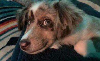Собаки, которые улыбаются: веселый челлендж
