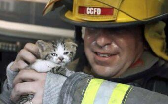Трогательные фото пожарных, которые спасают кошек