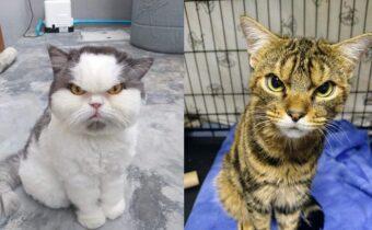 Котики, которые сделали такие грозные и недовольные мордочки, что лучше их не трогать