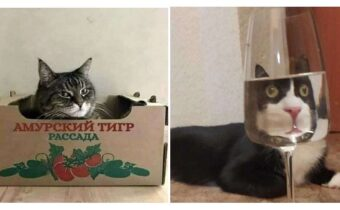 14 фото котиков для настроения