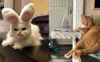 14 весёлых котиков, которые помогут разогнать скуку