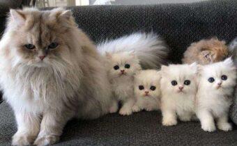 Гордые мамы и папы своих милых котят и щенят