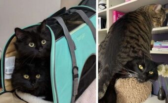 Когда кошка в доме не одна, а как минимум две – вот, как они живут вместе